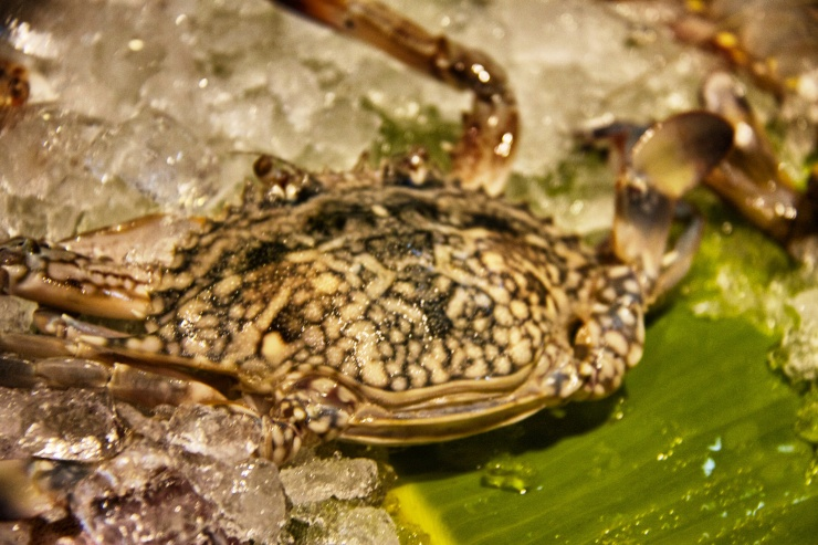 Local crab