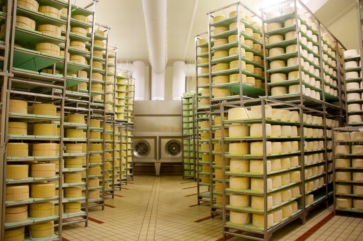 Gorgonzola cheese wheels