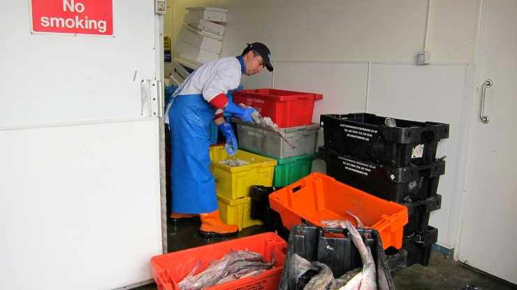 Sorting the catch at Howth
