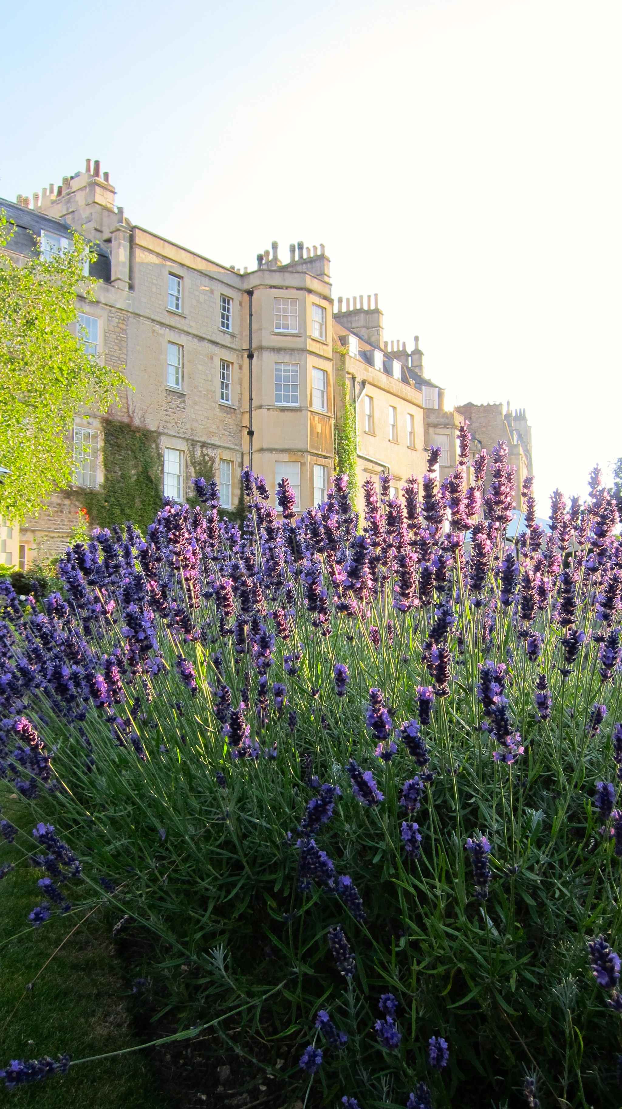 Lavender, Royal Crescent Hotel, Bath