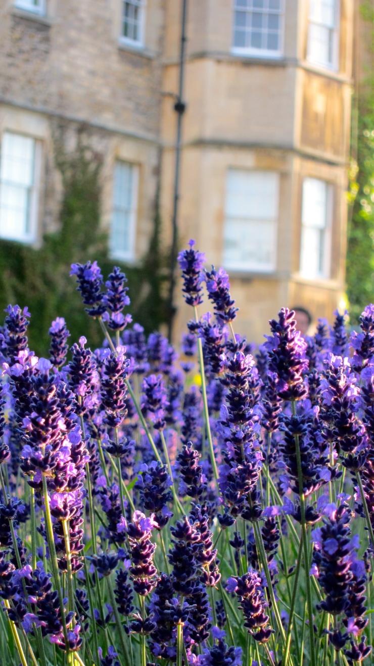 Lavender, Royal Crescent Hotel