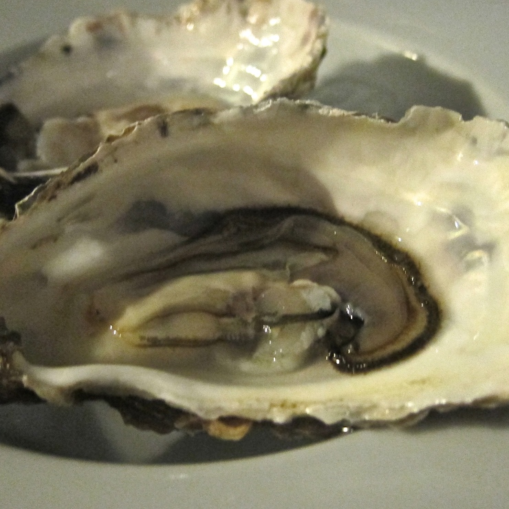 Fresh Oysters, Sumas Restaurant, Jersey