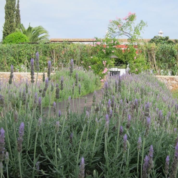 Lavender, Quinta Da Cebola Vermelha
