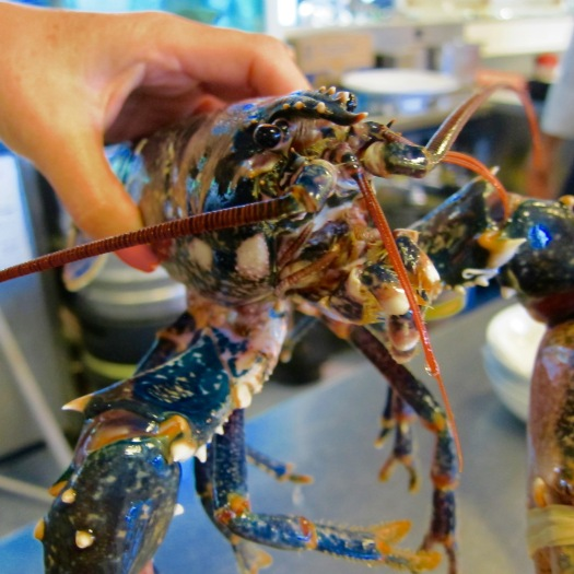 Blue Lobster, The Oitavos