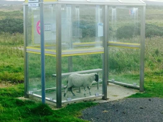 Bus stop, Islay